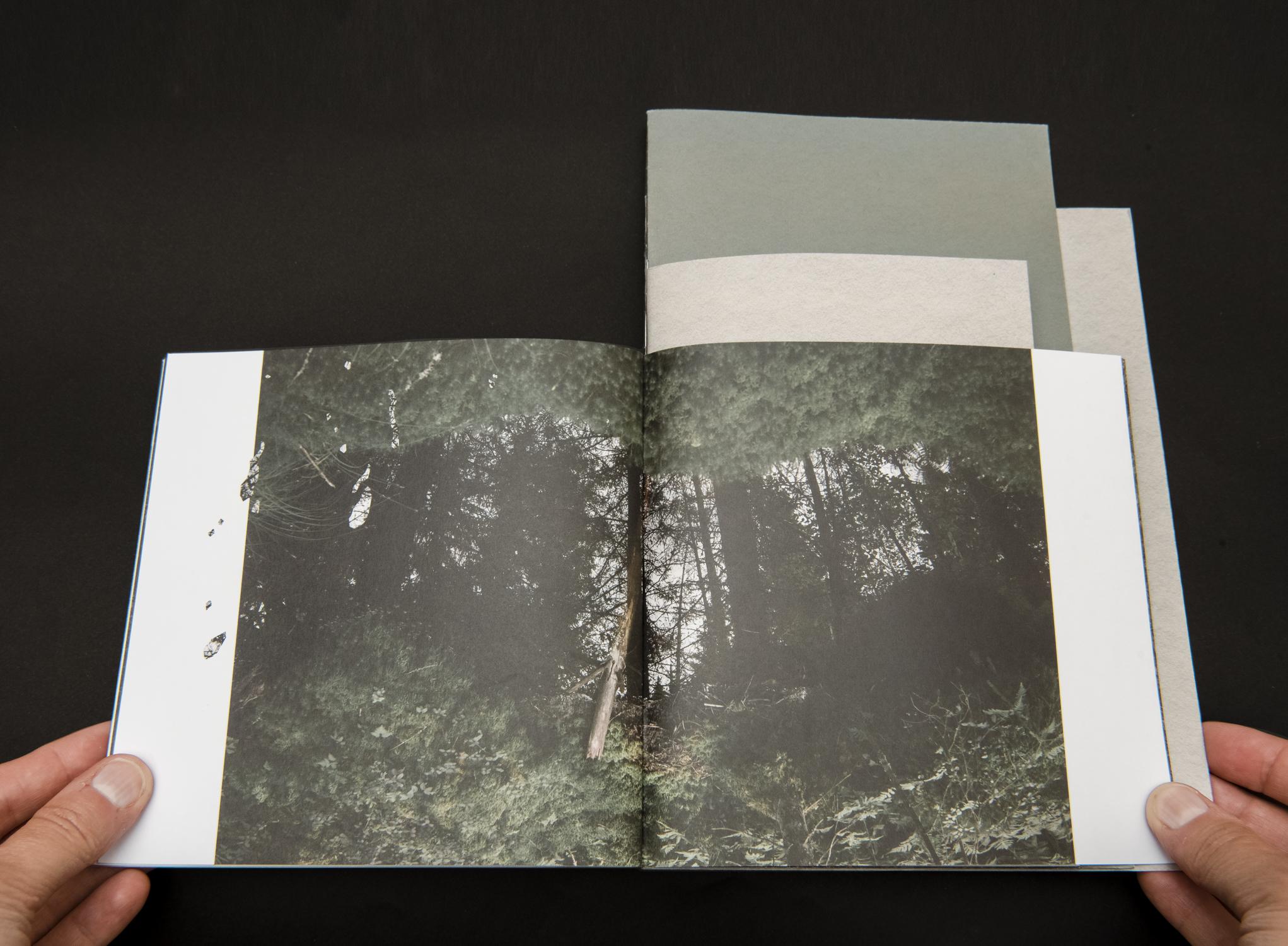 Une forêt – 02