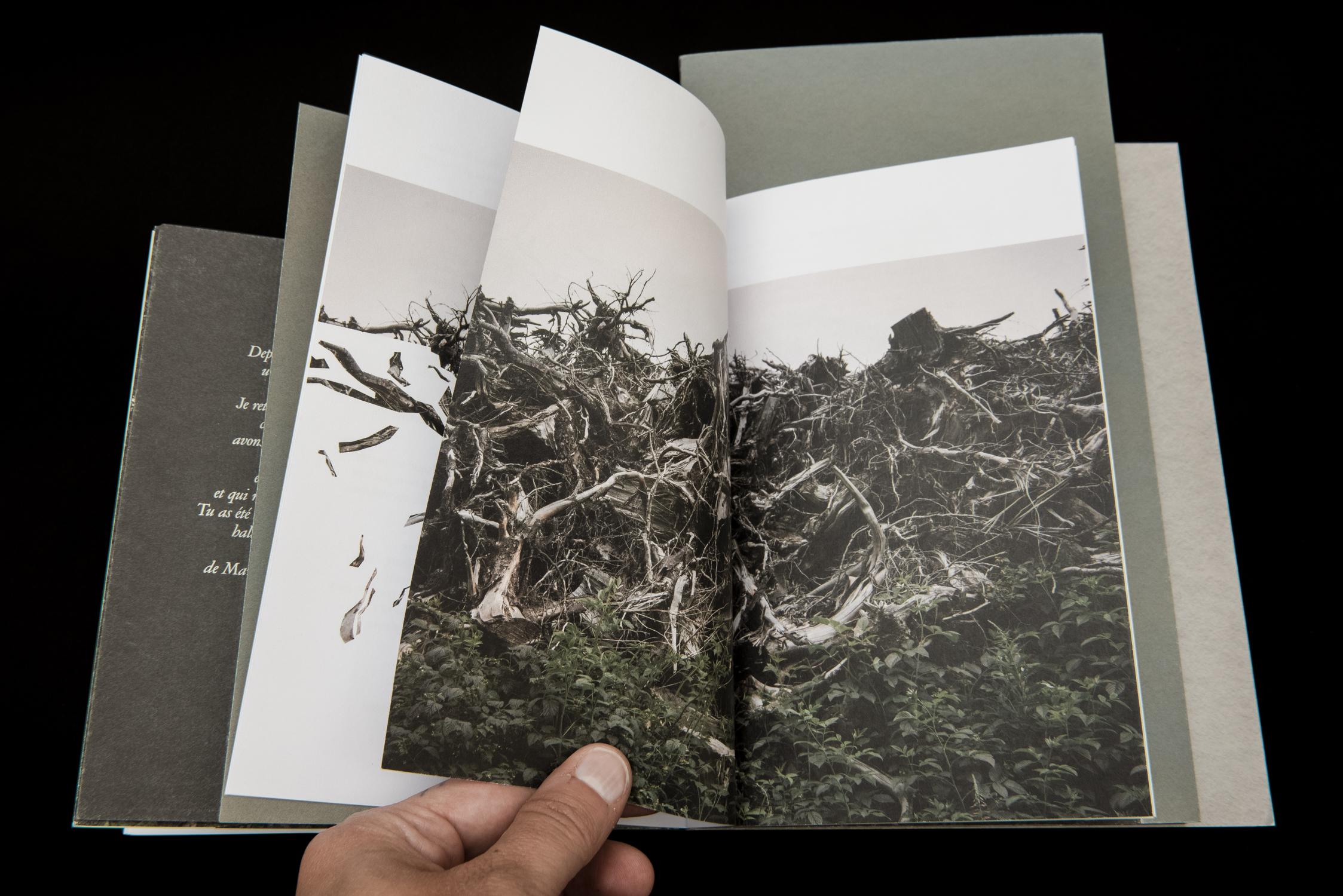 Une forêt – 05