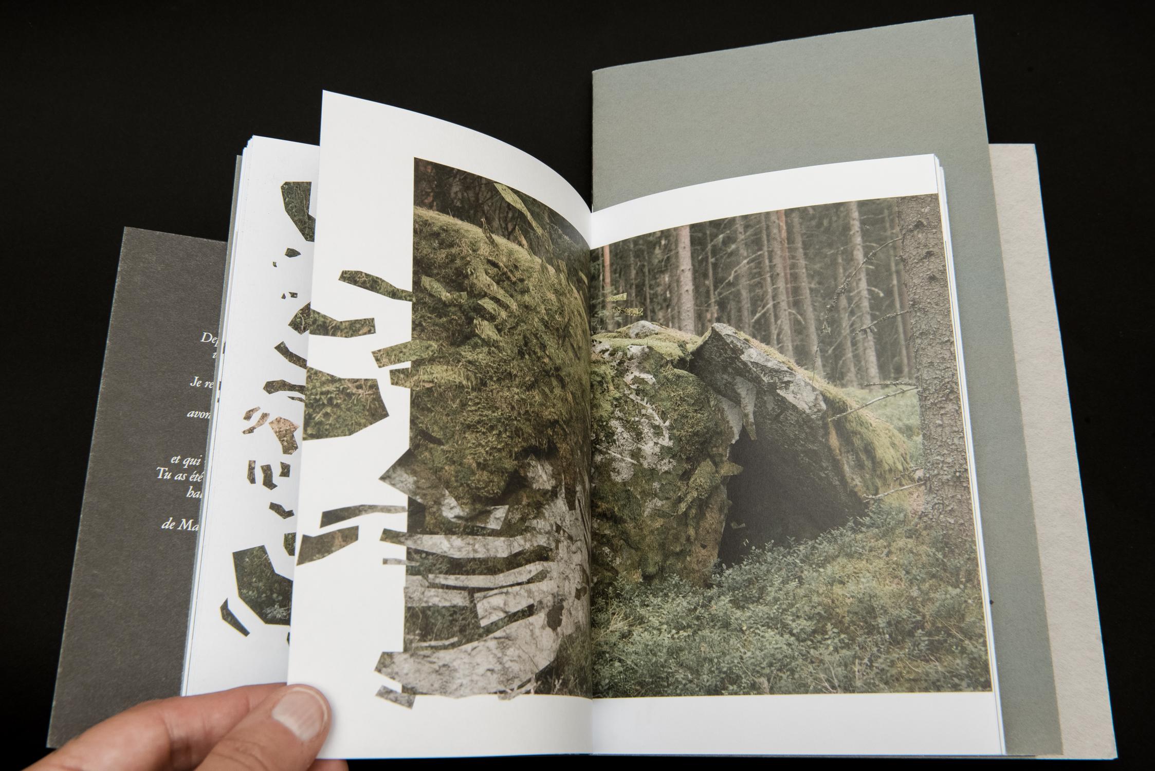 Une forêt – 07